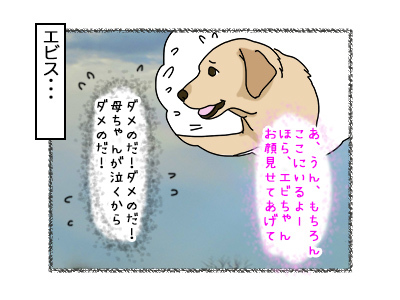 31102017_dog3.jpg