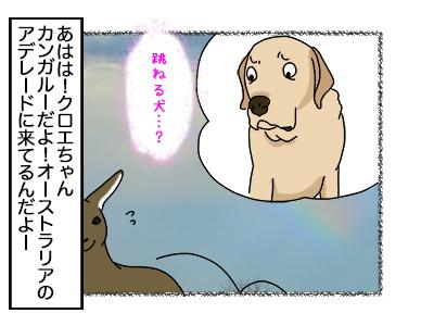 31102017_dog6.jpg