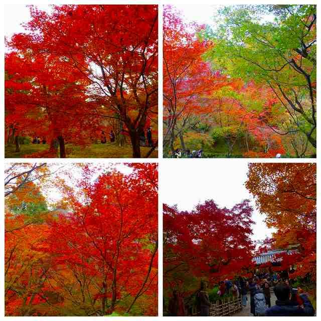 Collage_Fotor2_201711292138050aa.jpg