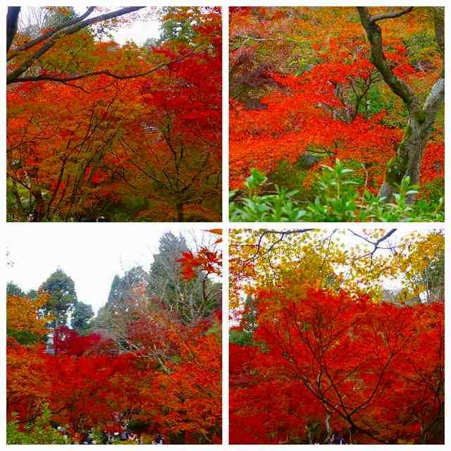 Collage_Fotor3_20171129213804d2f.jpg