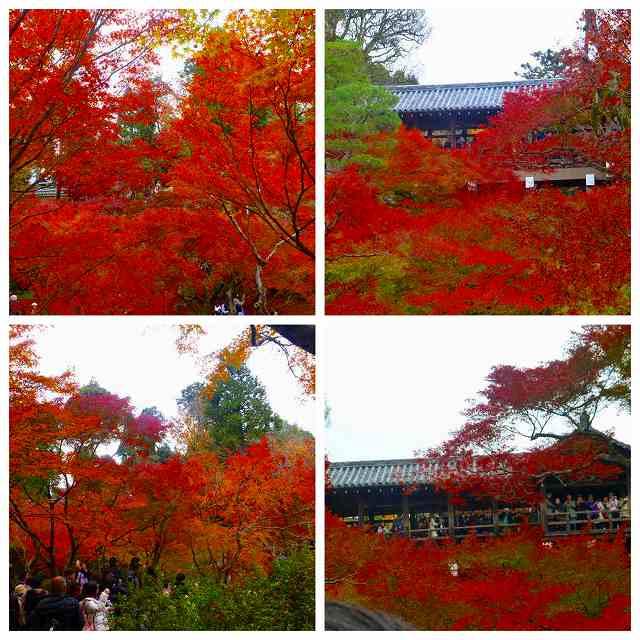 Collage_Fotor4_20171129213804c53.jpg