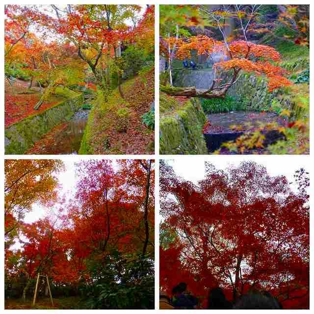 Collage_Fotor5_20171129213743ab2.jpg