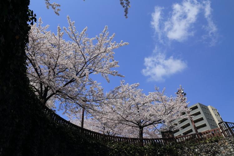 石神井川沿い2-S