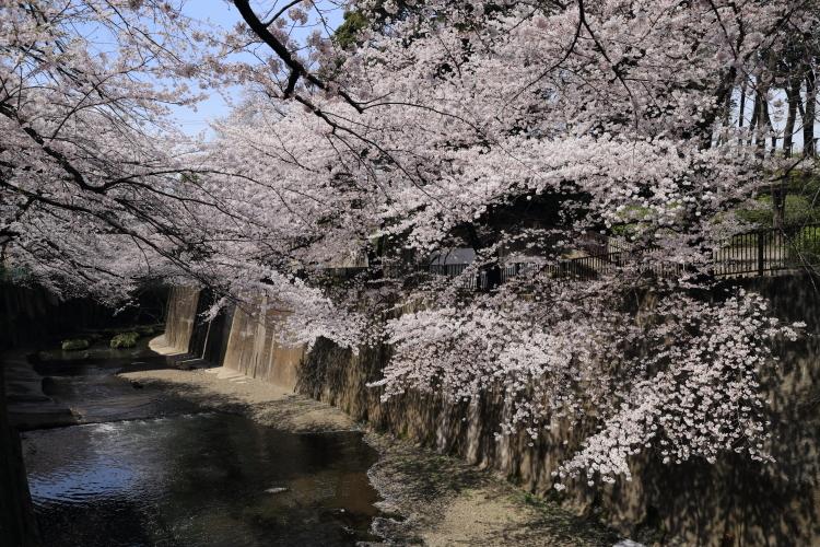 石神井川沿い3-S