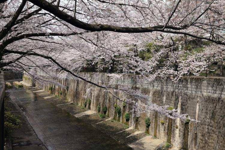 石神井川沿い5-S