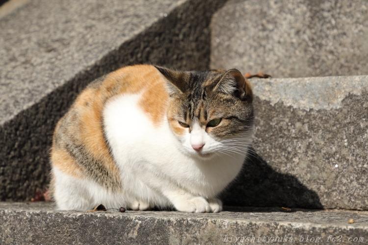 3049 尾道の猫ーSN
