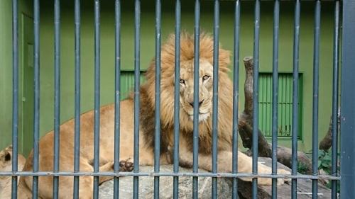 2911動物園 (1)