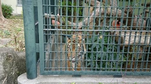 2911動物園 (2)