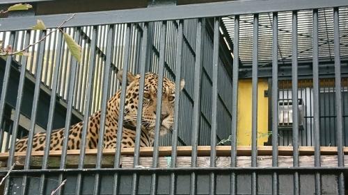 2911動物園 (4)