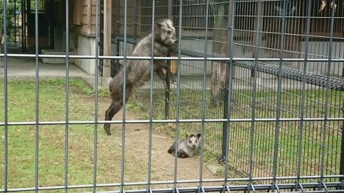 2911動物園 (5)