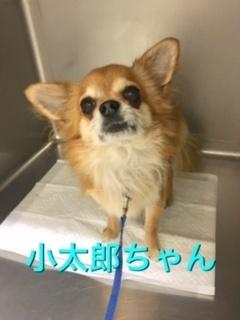 10月12日小太郎ちゃん