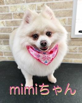 12月10日mimiちゃん