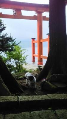 箱根神社 キャバマル