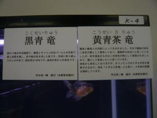 20100410_日本観賞魚フェア_0122