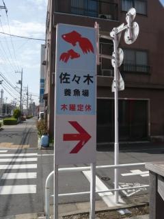 20100410_日本観賞魚フェア_0102