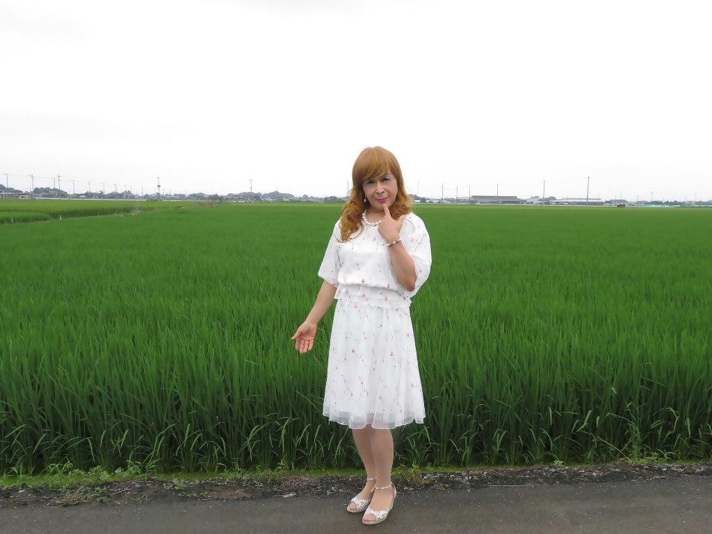 シフォン小花柄ツーピースA(5)