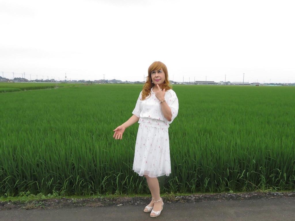 シフォン小花柄ツーピースA(6)