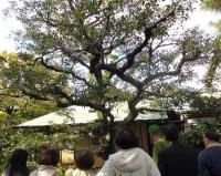 西尾家庭園