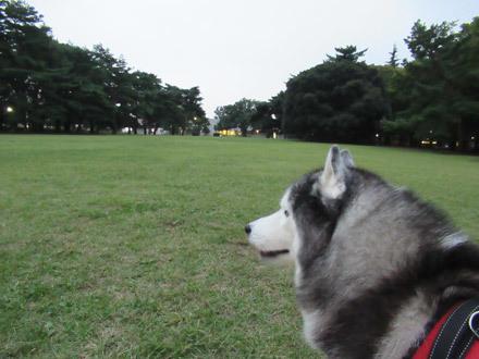 久し振りの野川公園