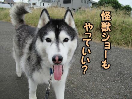 司会犬はプレッシャー?
