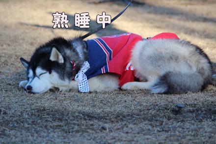 第11回ハスまみれ紹介タイム 司会犬