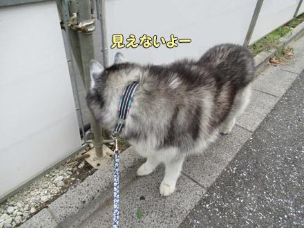 ポトフの猫探し散歩