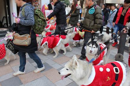 ハスキーズ・クリスマスウォーク2017☆