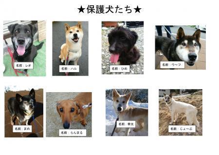 ブログ記事:譲渡会用写真(保護犬たち)縮小版