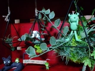 井蛙博物館第二展示室 ルソー