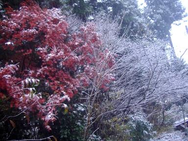 紅葉と雪1