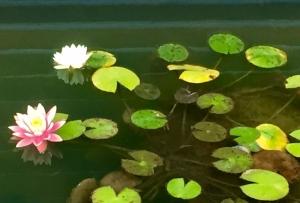 深川の雪と吉原の花-8