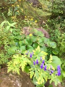 深川の雪と吉原の花-13