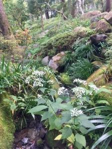 深川の雪と吉原の花-12