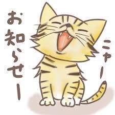 お知らせ猫