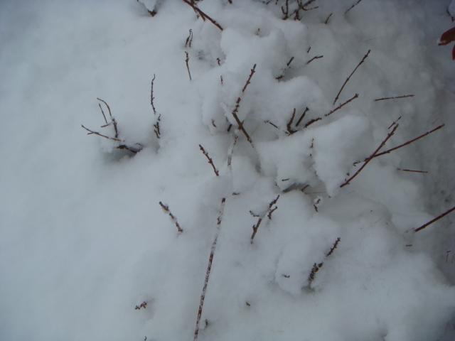 星病院雪3