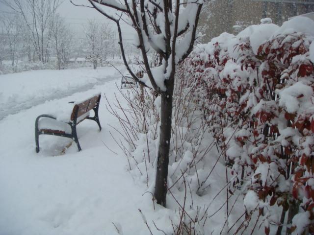 星病院雪1