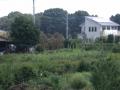 新井宿232-2 西新井宿交差点・首都高赤山方向側道から北東方向風景を見る ⅱ