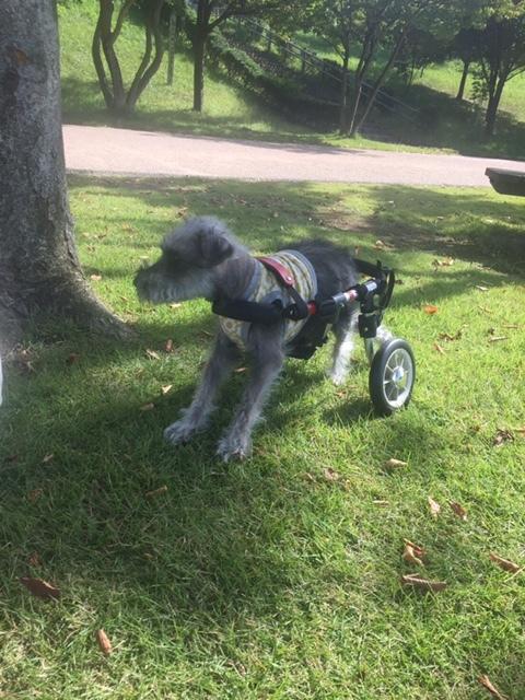 車椅子のセシル