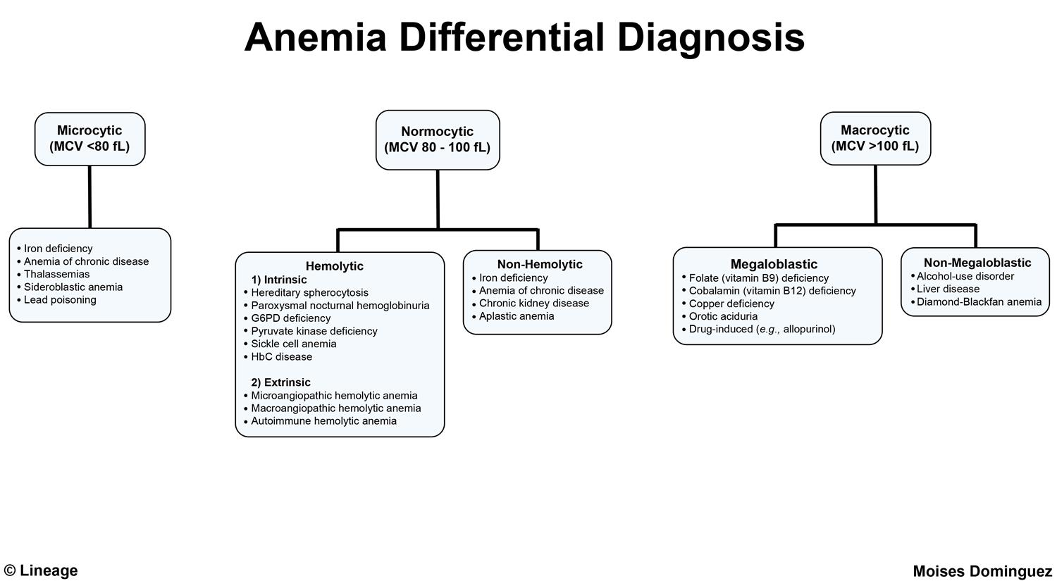 differential20for20anemia20-20moises20d.jpg