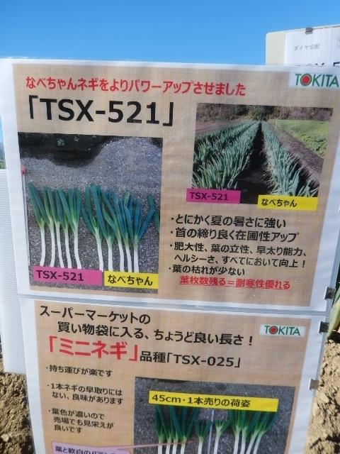 DSCN8309 (480x640)