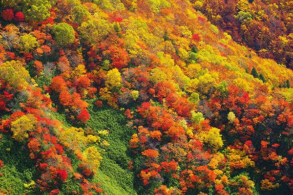 犬倉岳の紅葉