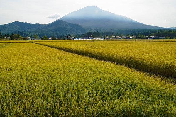 西根平笠から田んぼと岩手山
