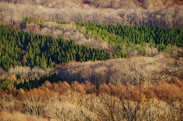 猫山から見下ろす森