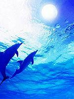 dolphin3.jpg