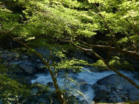面河渓 1