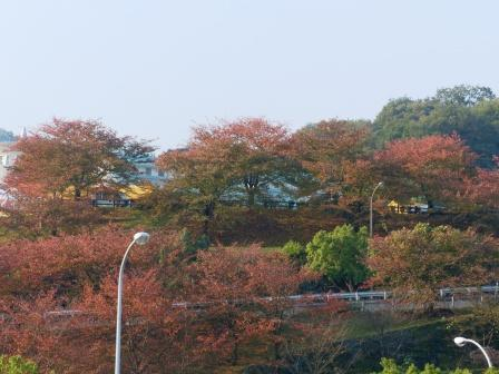 石鎚山SA で見た紅葉 1
