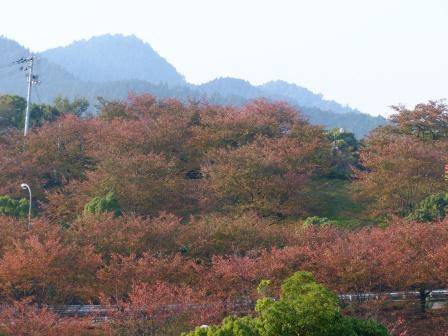 石鎚山SA で見た紅葉 2