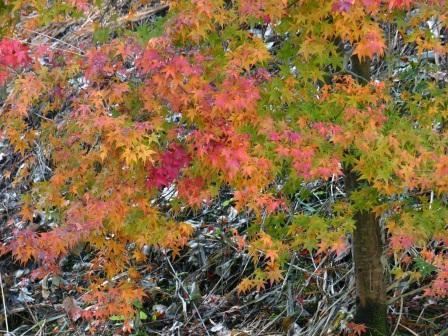 稲荷山公園 紅葉 1