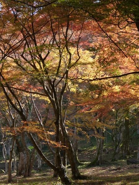 稲荷山公園 紅葉 6