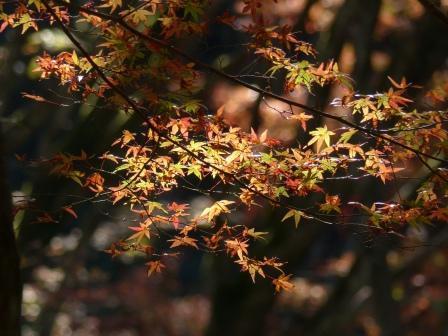稲荷山公園 紅葉 7